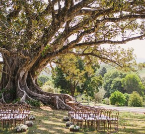 Ceremony Bentwood Chairs with Cushions
